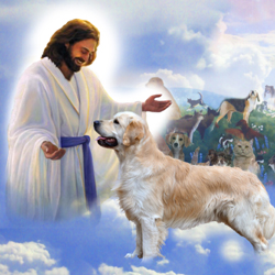 my pictures of dogs in heaven - do dogs go to heaven?