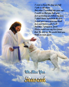 Picture of dog in Heaven with Jesus