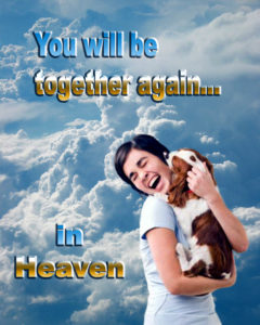 picture of the joy when owner and dog meet again in Heaven